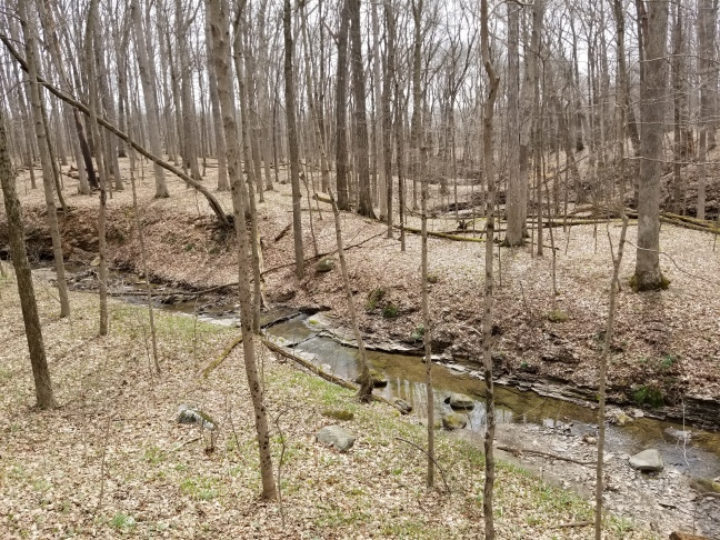 Highbanks Metro Park: Mounds, Eagles, and Becoming a Father